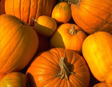 pumpkin-a-fairytale-end-to-insulin-injections