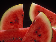 battling-watermelon-virus-with-genes-from-bottlegourds