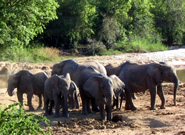 elephants--fear-of-angry-bees-could-help-to-protect-them